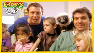 🐵 Zoboomafoo | HD Compilation | 1+ Hours | Animal Shows for