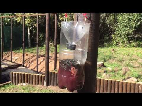 Killing Flies: How to make a homemade fly trap