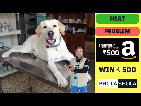 Pet Care - Female Dog Heat Problem - Bhola Shola
