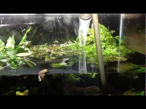 Adding tap water into the 120 gallon aquarium