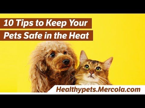 10 Tips to Keep Your Pets Safe in the Heat