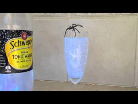 HALLOWEEN GLOW SOFT DRINK cheekyricho