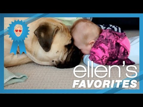 Ellen's Favorite Puppy Love Videos