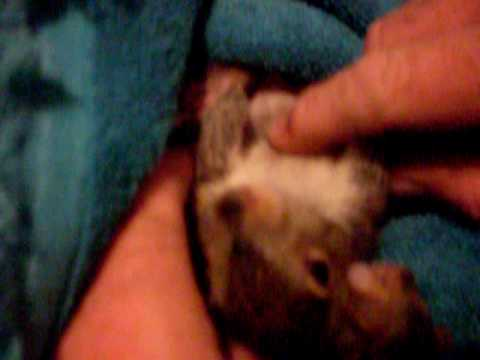Baby Squirrels -Too Cute