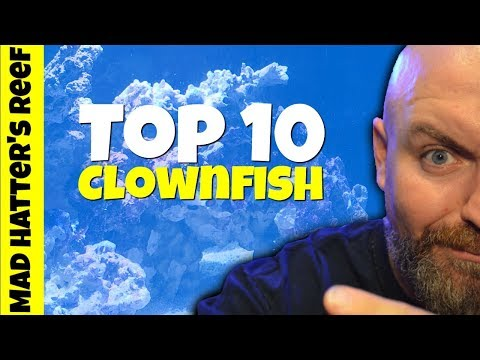 Top 10 Designer Clownfish