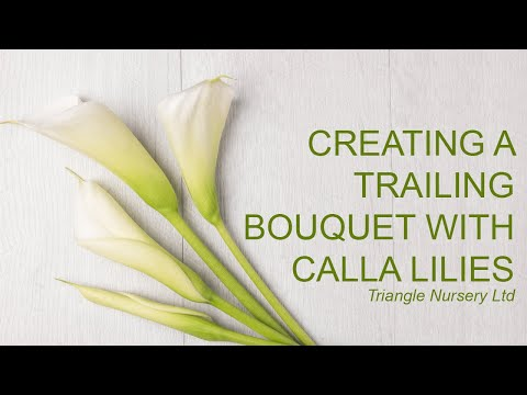 Triangle Nursery - Creating a trailing bouquet with Calla Lilies and Beargrass