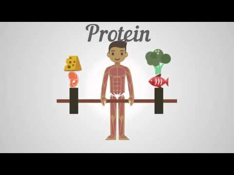 Biology - Proteins, Carbohydrates & Fats