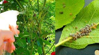 Ce rol joacă insectele în natură pe scurt. Valoarea insectelor în natură și în viața omului