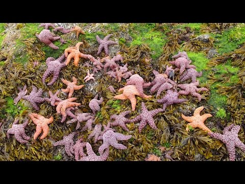 The Sea Star Epidemic: An Arms Race for Marine Biodiversity