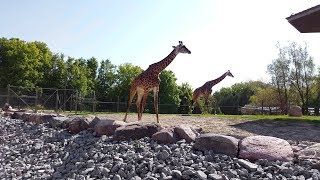 Toronto Zoo Tour Walkthrough 2018 [4K]