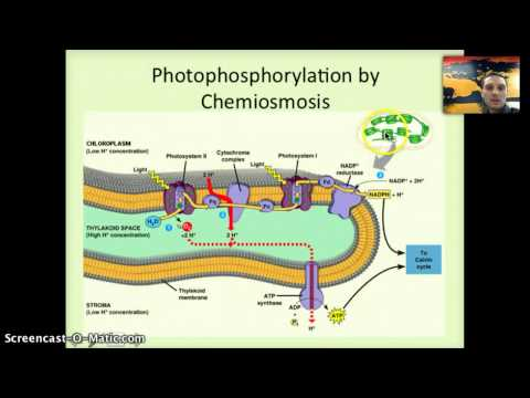 IB 2.9 & 8.3 - Photosynthesis Part 2