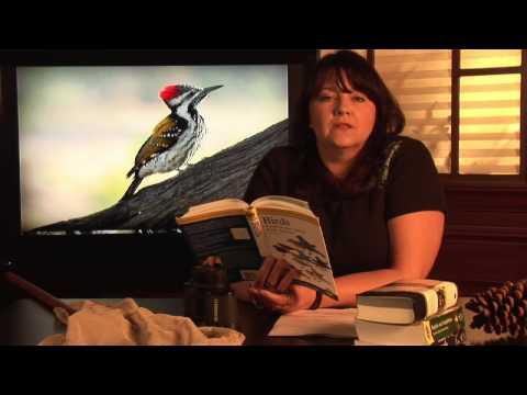 Animal Habitats : Where Do Woodpeckers Live?