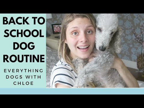 DOG SEPARATION ANXIETY SOLUTIONS - FOR WHEN KIDS GO BACK TO SCHOOL