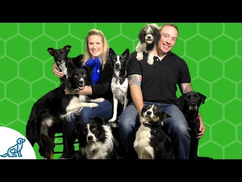 Are You A Genuine Dog Trainer?