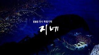 EBS 다큐프라임 - Docuprime 창사 특별기획 '지네'_#001