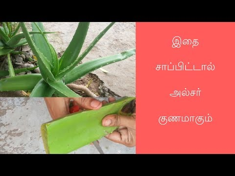 Medicine for ulcer / how to cure ulcers / uses of aloevera