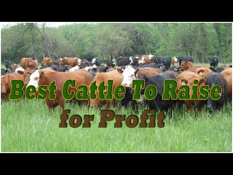 Best cattle to raise for profit