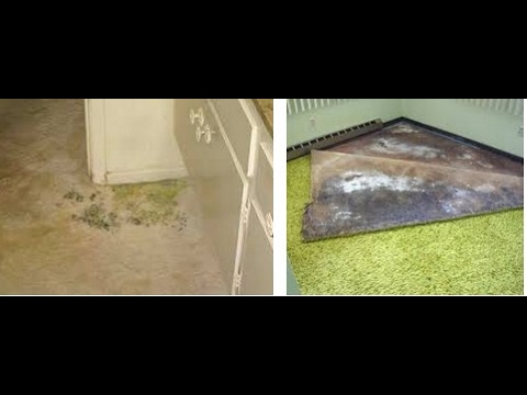 how to get mold out of carpet review