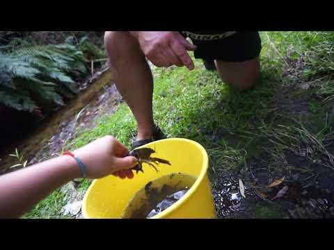 Catching Crayfish Trip, Alexandra NZ 2018