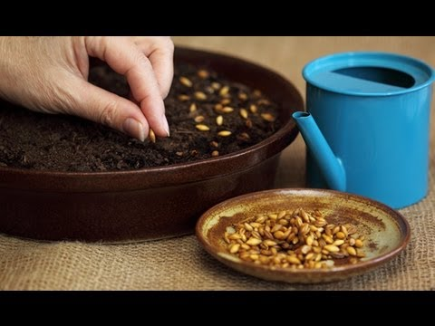 How to Plant Flower Seeds -  Seeds Planting Tips