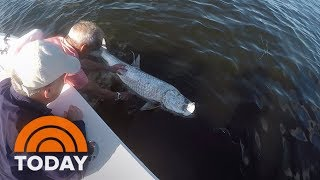 Severe Red Tide Killing Sea Life Off Florida's Coast | TODAY