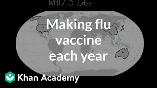 Making flu vaccine each year | Infectious diseases | Health & Medicine | Khan Academy