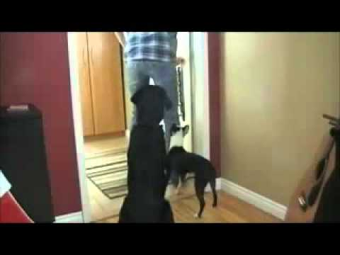 How to Stop Your Dog From Barking at The Door.mpg