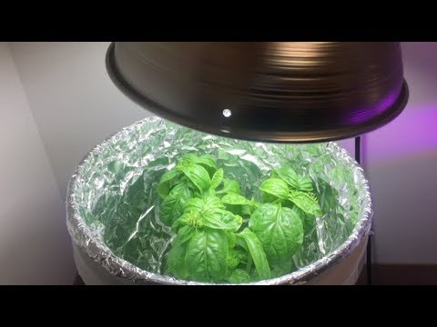 Better Bucket Brings Basil Bounty