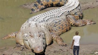 30 Biggest Animals Ever Captured !