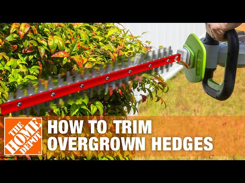 How To Trim Overgrown Hedges - The Home Depot