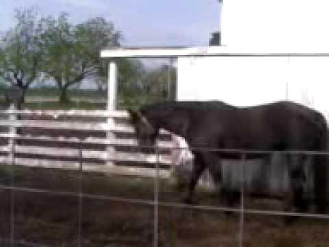 Horse Photic Headshaking Syndrome