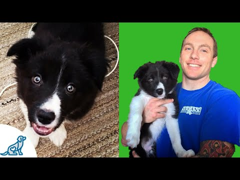 Puppy Potty Training Tips- Livestream Subscriber Q&A