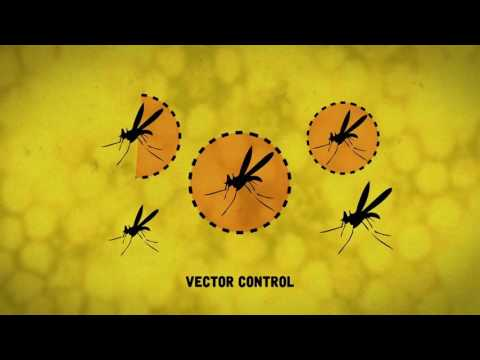 Yellow Fever: A closer look at the disease