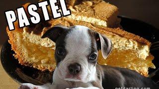 Pastel De Cumpleaños Para Perros Petdarling Golosinas 5