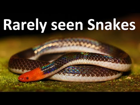 4 Snakes you have probably NEVER seen before