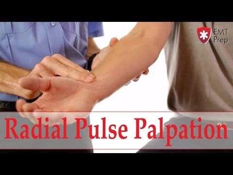 How to Obtain a Radial Pulse - EMTprep.com