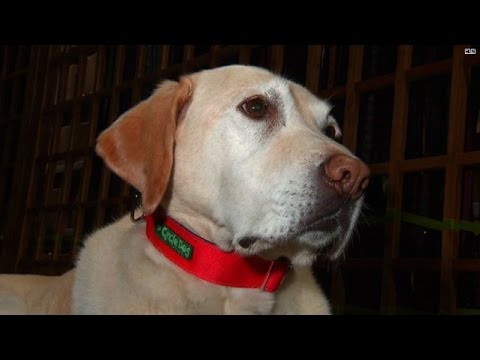 Company makes dog collars out of old bicycle tubes