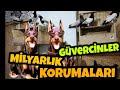 Download  Milyarlık Güvercinleri Doberman Köpekleri Koruyor Erdal Akbay Ziyareti.  MP3,3GP,MP4