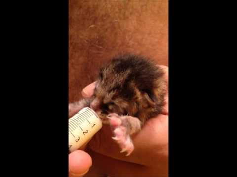 Newborn Kitten feed