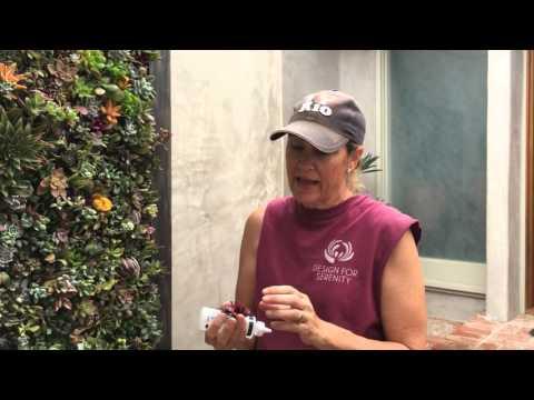 Succulent Tip of the Day (Vertical Wall)
