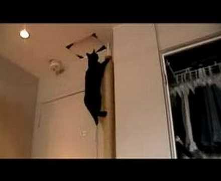 Cat climbing his scratch post