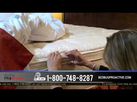 Check Your Hotel For Bed Bugs : How To