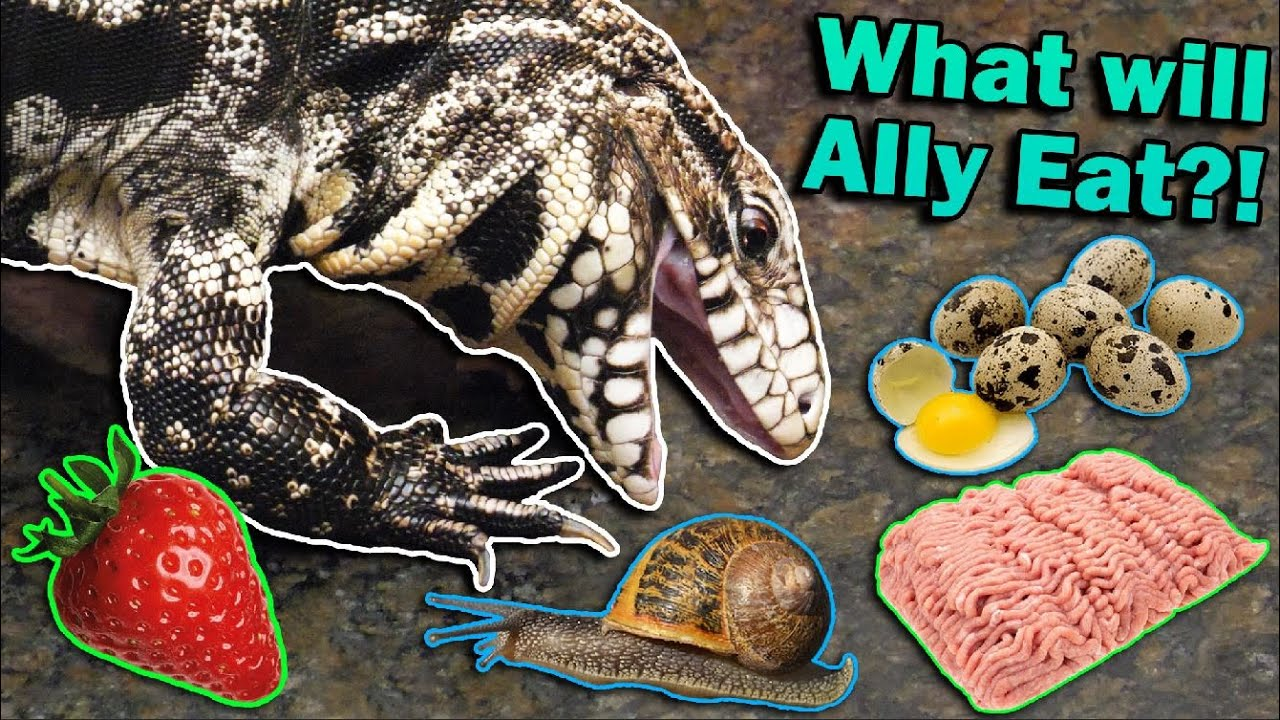 Finding our Tegu's Favorite Food!