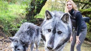 MASSIVE CANADIAN WOLVES UP CLOSE - Wolf Girl Anneka