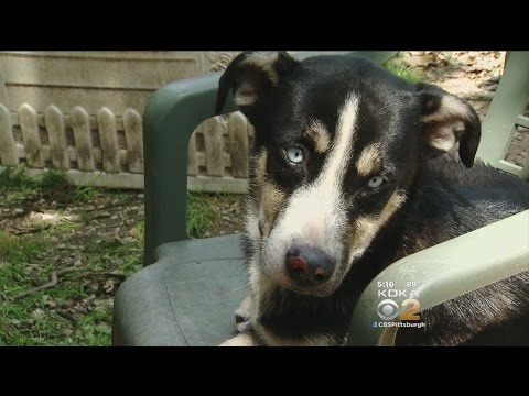 Missing Dog Back With Owner After Incredible Rescue
