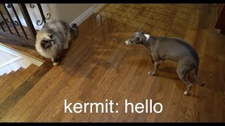 My Dogs Meet A Cat