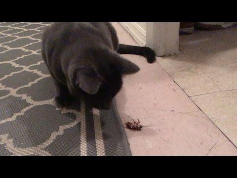 Bea & Arthur Catch a Roach