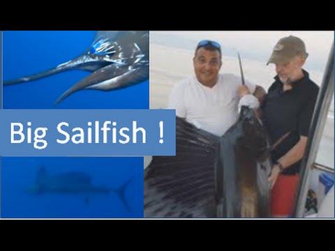Fishing Adventures #89 - Big Sailfish in Fujairah
