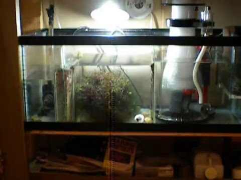 Reef Octopus 152S Protein Skimmer setup and install Part 2