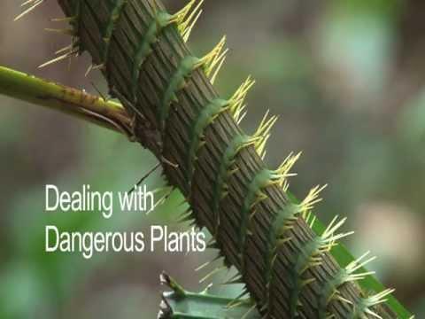 Dealing with Dangerous Jungle Plants